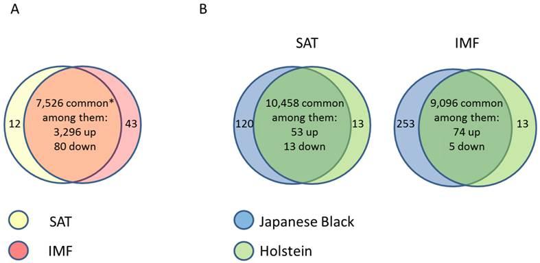 Molecular Heterogeneities of Adipose Depots - Potential