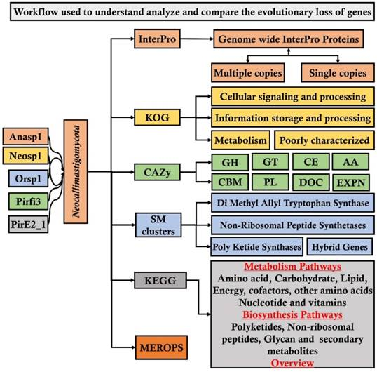 Genome Wide Analysis Reveals the Extrinsic Cellulolytic and